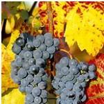 vignobles côte du rhône