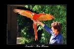 zoo, upie, oiseau, drome, visite, spectacle, jardin, ferme, parc, animaux, Alpes