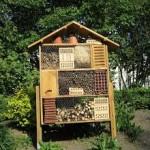 hôtel, hôtel à insectes, biodiversité, pollinisation, chaîne, alimentaire