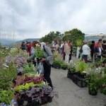 flore, plante, rare, foire aux plantes rares, clair, annonay, ancienne, variété, culture, bulbes