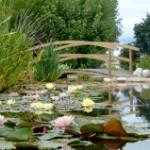les jardins aquatiques, musée, lyon, visite, balade, découverte, hébergement, location, camping, nature, eau, rivière