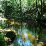 Baignade dans la rivière Le Limony, camping, ardeche, location, caravane, gîte, chambre d'hôte, balade, activité, loisirs, randonnées, baignade, rivière